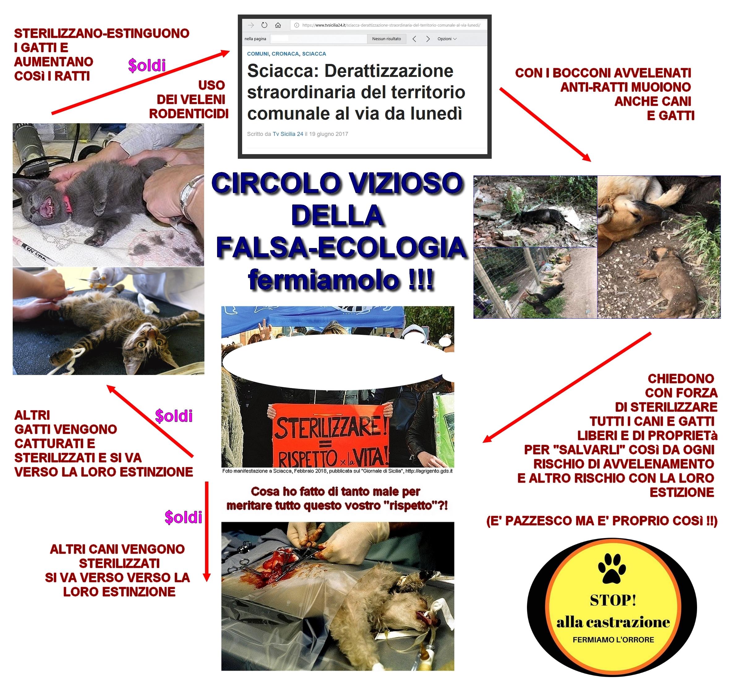 Fermiamo Lo Sterminio Dei Gatti Anche In Italia Basta Scuse Di